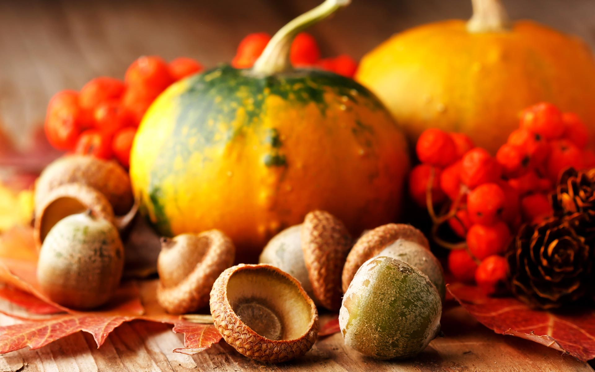 Cute Thanksgiving Wallpapers Free 96 Cute Thanksgiving Background 2880x1800 Funny