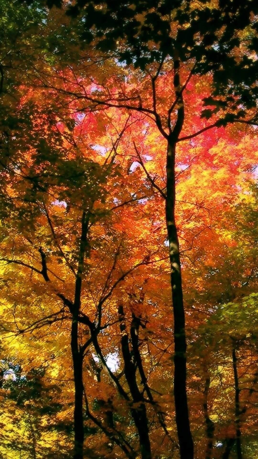 Fall Android Wallpaper Free Fall Wallpaper For Android Sf Wallpaper