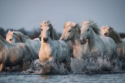 Seven horse wallpaper - SF Wallpaper