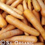 Healthy organic carrots