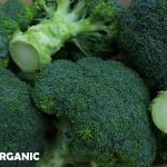 Healthy green broccoli
