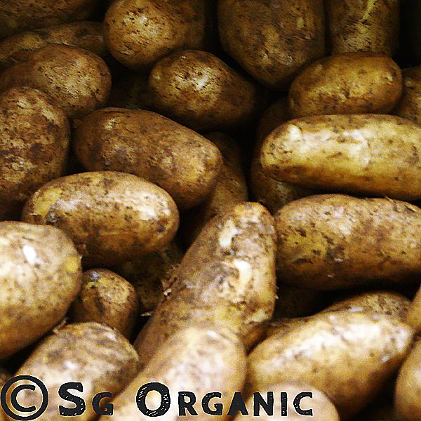 SG Organic Potatoes - Dutch Cream