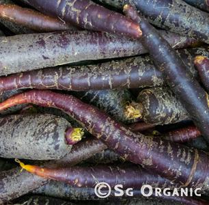 Purplecarrots-SGO