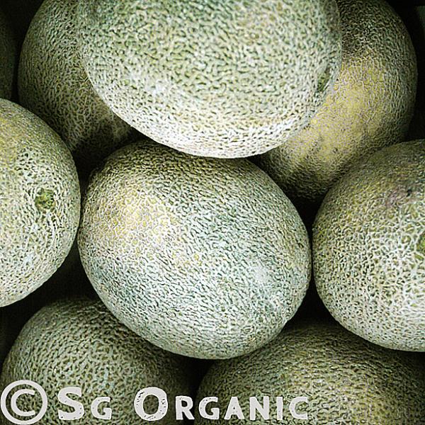 SG Organic rockmelon