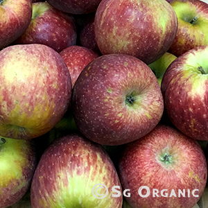 apple-red delicious