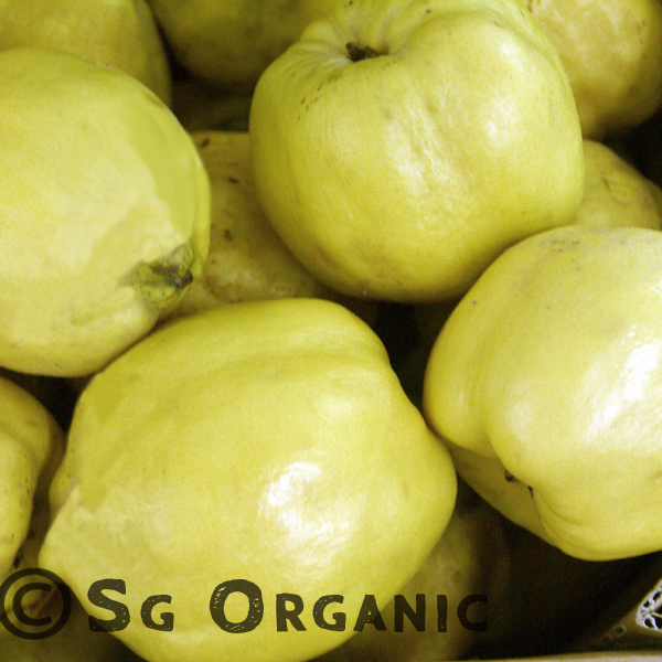 SG Organic Quince