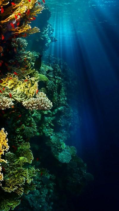 Underwater Wallpaper c69baccf6b146dd80aa889b5ddea1d27 ...