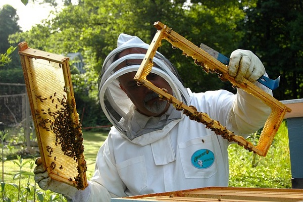 Beekeeper honey farm