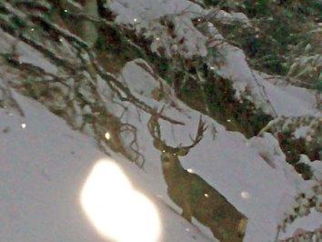 deer-trophies-17