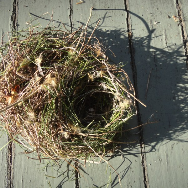 Nest  Stress