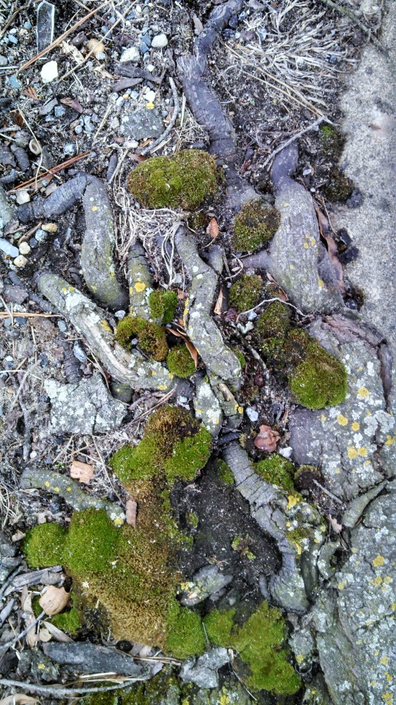 moss and roots from Shalavee.com