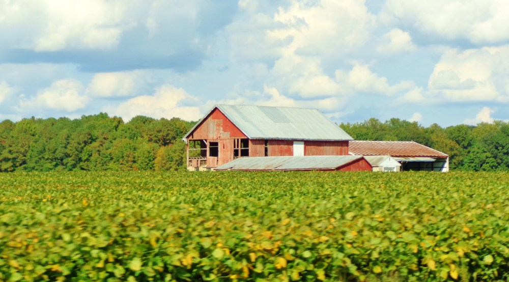 ThA barn on Eastern Shore farmland on Shlavee.com