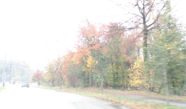 fall foliage in the rain on Shalavee.com