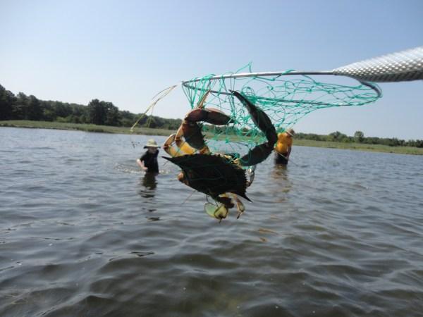 crabbing on the Eastern Shore on Shalavee.com
