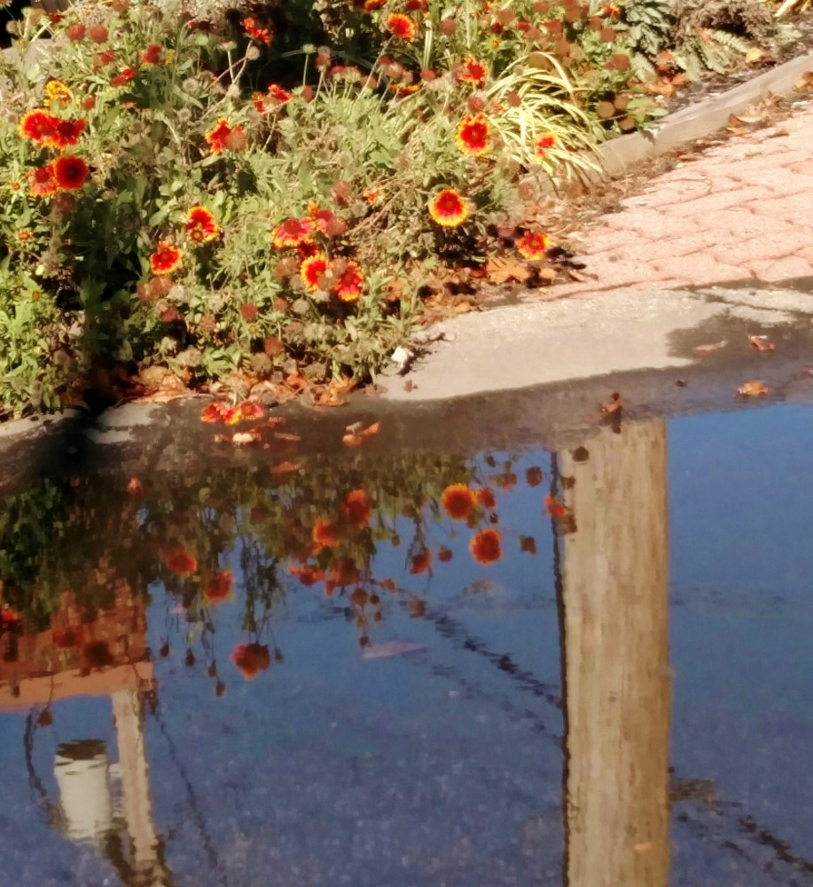Guillardia and a puddle on Shalavee.com
