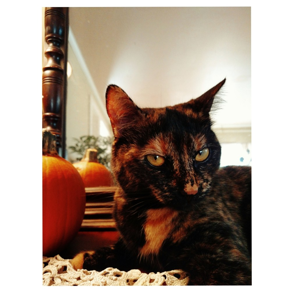 Vixen kitten Chessie on Shalavee.com