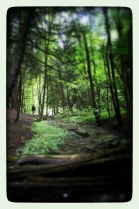 forest_Christy