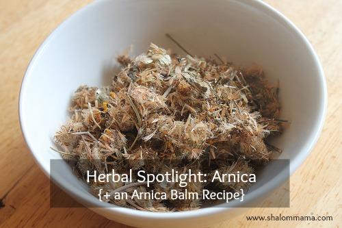 Herbal Spotlight: Arnica {+ an Arnica Balm Recipe}