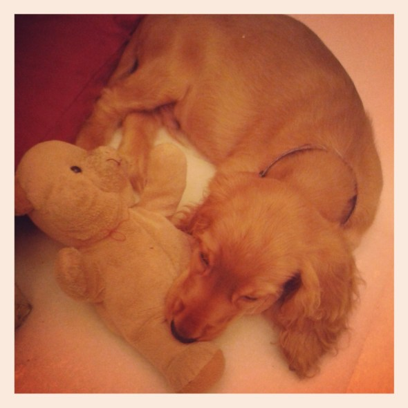 Archie wrestling with his teddy bear