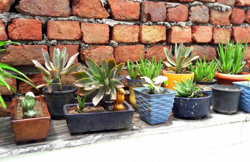 shalini-baisiwala, glistening-sunshine, rain-drops, pitter-patter, when-raindrops-fall-on -green-plants
