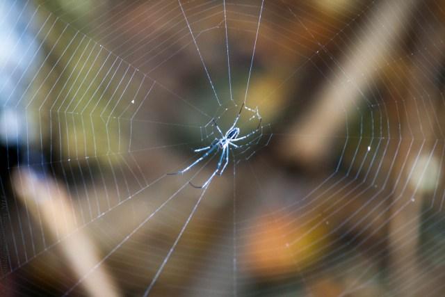 spider-web-blogstars-blogchatter