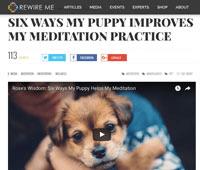puppy-meditation