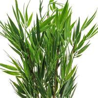 46cm Artificial Bamboo Bush - Decorative Bamboo Green ...