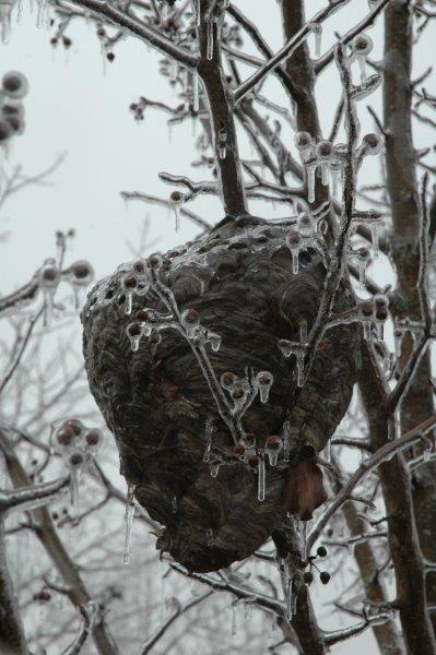 A vacant Hornets nest on the farm