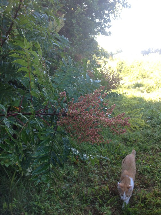 Poison sumac-remember if a cat goes through it and you pick it up- you're going to get the poisonous oil on you.