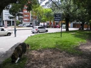 Mattie Gets to the Park