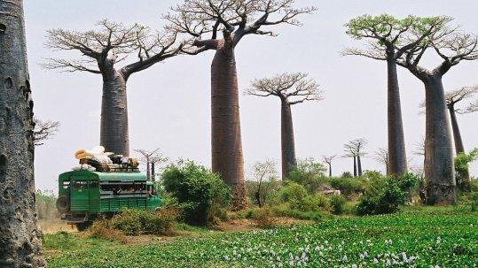 1024px-Madagascar_baobabs