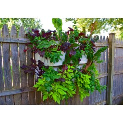 Small Crop Of Vertical Wall Garden Plants