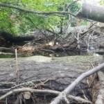 Down Tree Tewksbury Shawsheen River