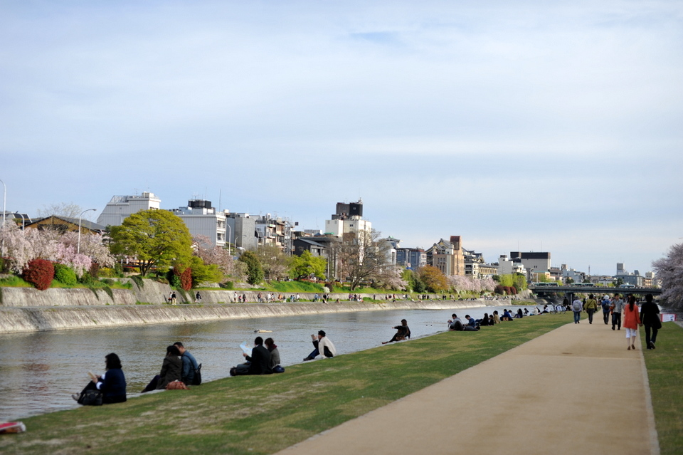 Couples enjoying the banks of the Kamogawa River with Sakura
