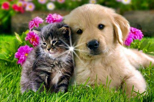 Pink Wallpaper With Cute Puppy Golden Retriever James Tyberonn Archangel Metatron The Sirian Nature Of
