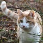 猫は腹巻をすると歩けない〜動きの基本、背骨の話〜