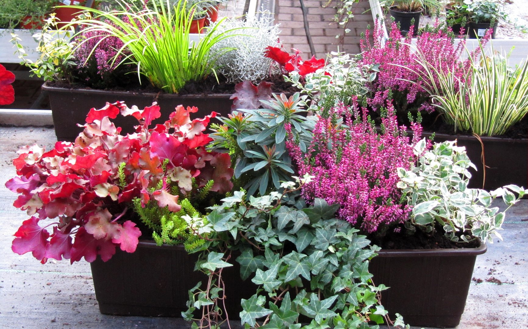 Balkon Blumen Hängend Balkon Blumen Hängend Fuchsia Plant Care How To Grow And