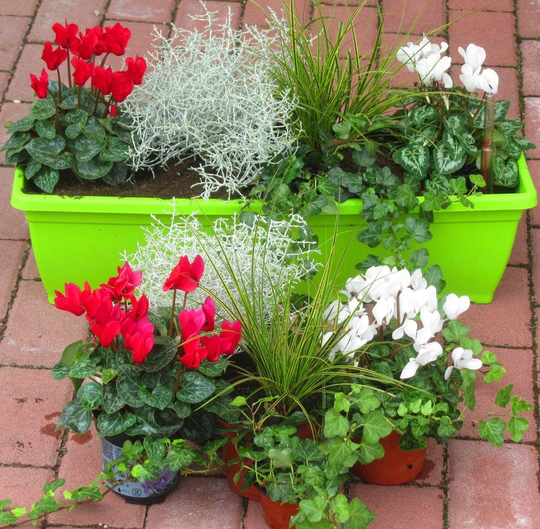 Winterharte Balkonpflanzen Liste Welche Krauter Sind Winterhart
