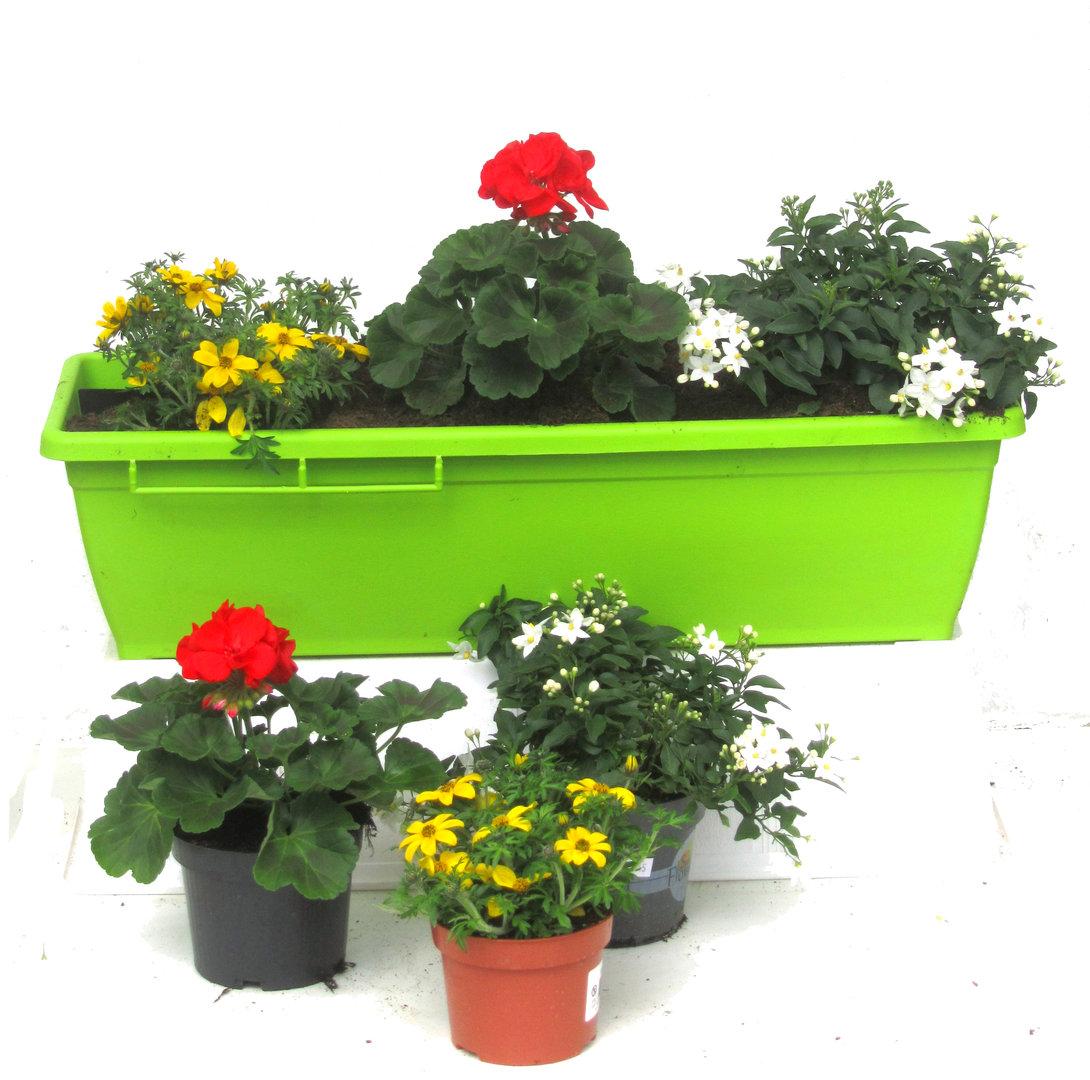 Balkonpflanzen halbschatten pflanzzensset einzelgrab for Sommerpflanzen fur balkonkasten