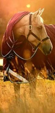 Online Store Horseware Ireland