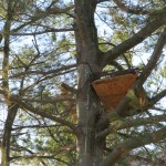 Don't forget to look for the nest of Greenway, our resident owl.