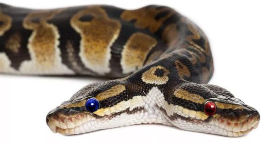 politics-twoheads-one-snake