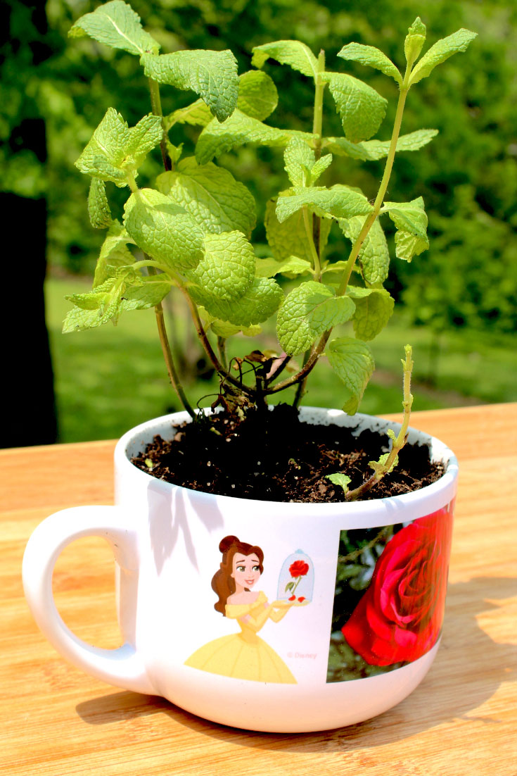 Large Tea Cup Planter Diy Fairy Garden And Other Flower Pot Painting Ideas Shutterfly
