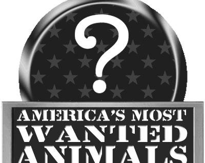 Top hunted animals in america