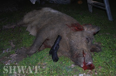 Hog Killed with 9mm