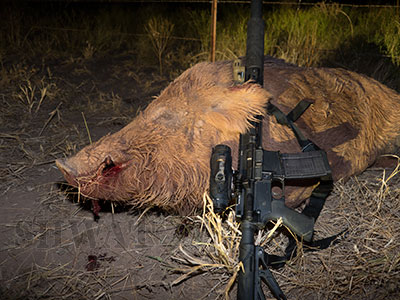 Subsonic 300 Blackout Hog Hunting