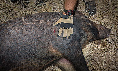 Subsonic 300BLK Hog Hunting
