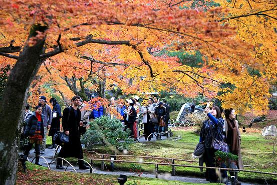 Fall Leaves Wallpaper Border Vivid Fall Foliage Forecast For Japan Japan Real Time Wsj