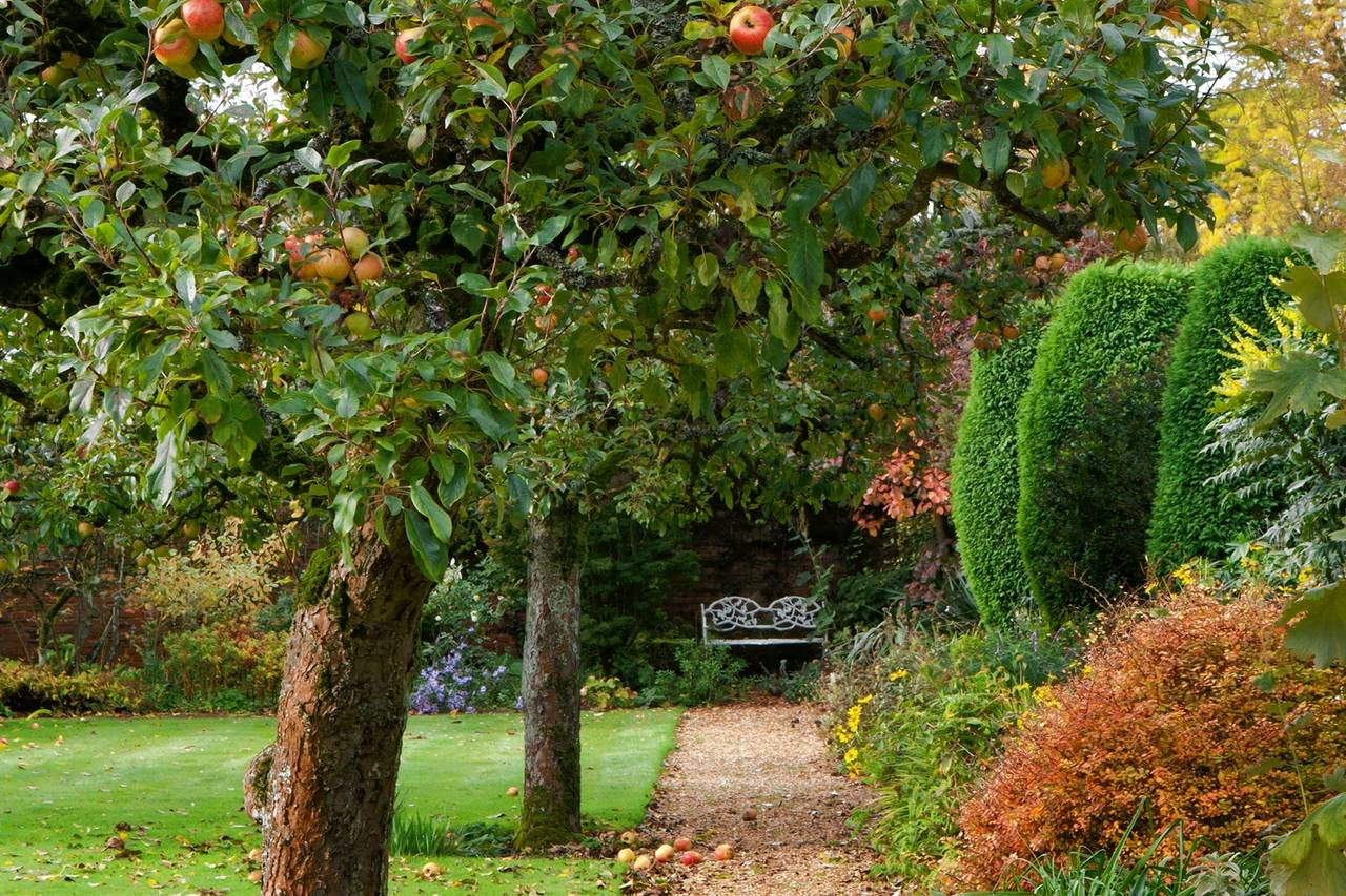 Garden Trees The Apple Trees To Pick For A Home Garden Wsj