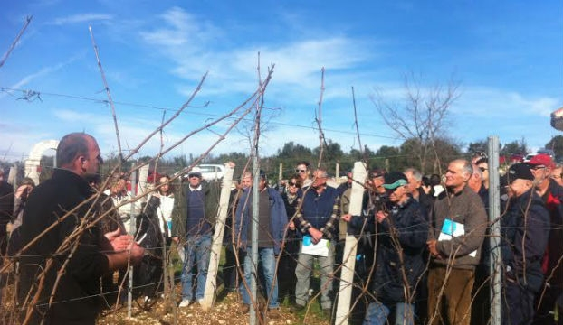 vinograd prižba